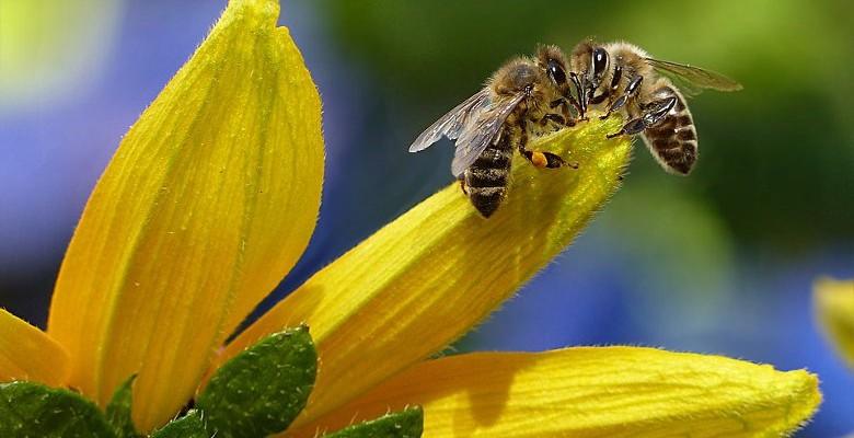 Apiculture : des solutions pour soutenir la production de miel